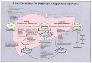 Liver dextoxification pathways